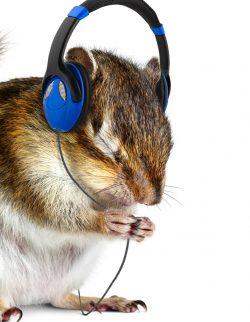 """""""Jetzt gibt's was auf die Ohren"""" Wir machen ein Hörspiel!"""
